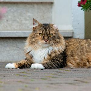 Tiersitter Bielefeld - Betreuung von Katze Puschel