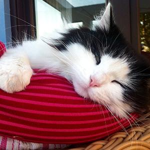 Tiersitter Bielefeld - Betreuung von Katze Anni